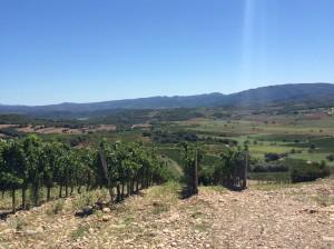 secastilla new vines